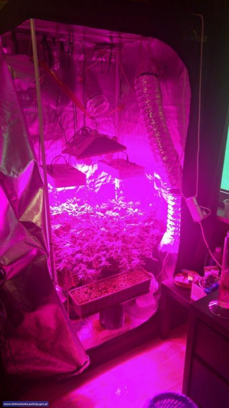 Dzielnicowi zlikwidowali domową plantację marihuany