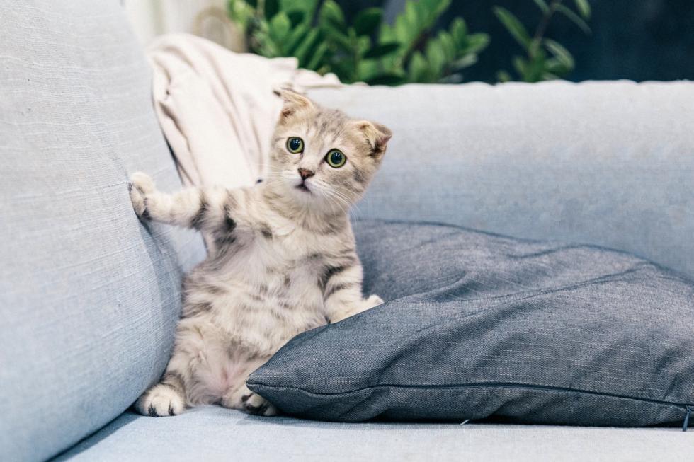 Kot wnowym domu - jak się przygotować na małego futrzaka?
